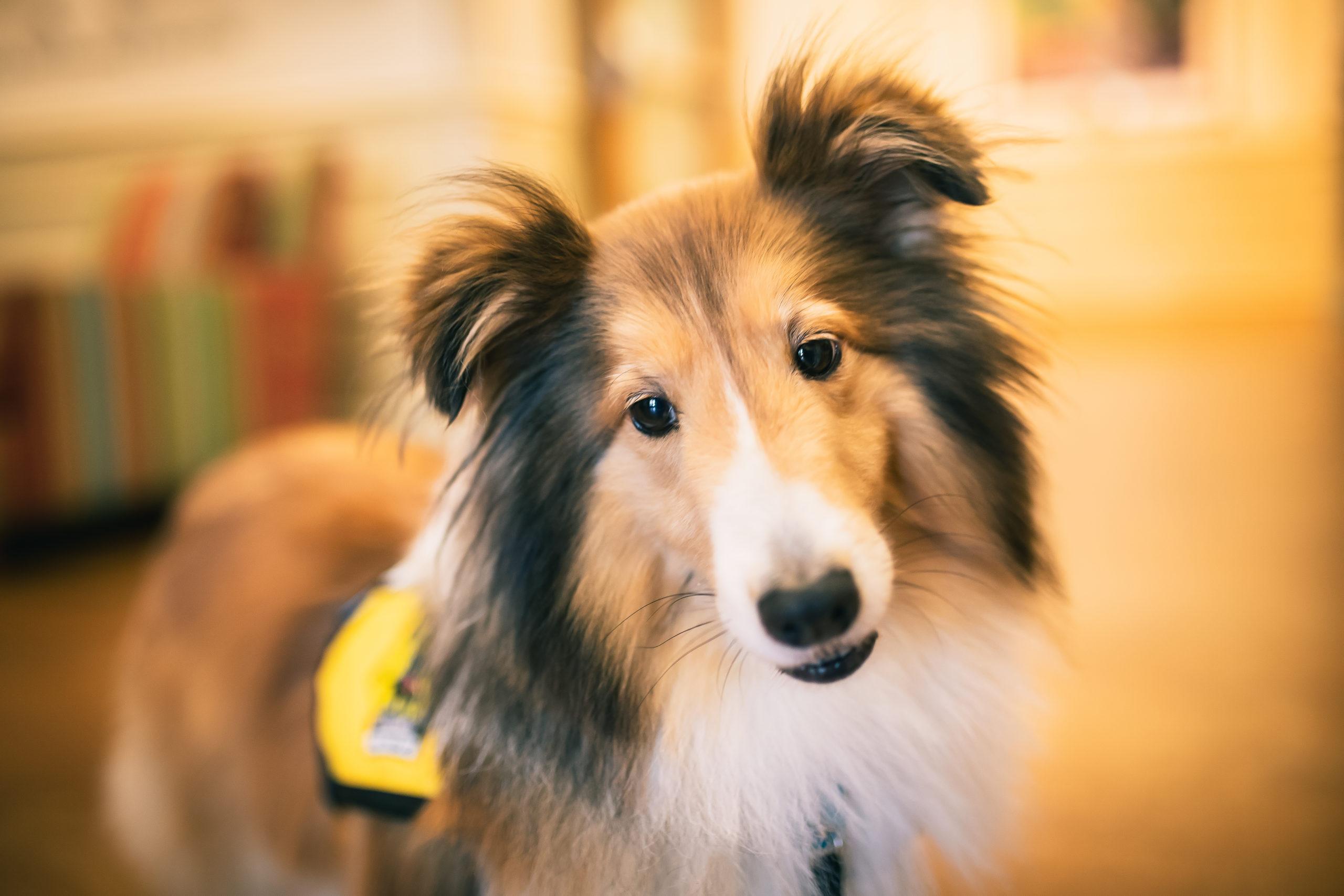 Should Own a Pet Dog